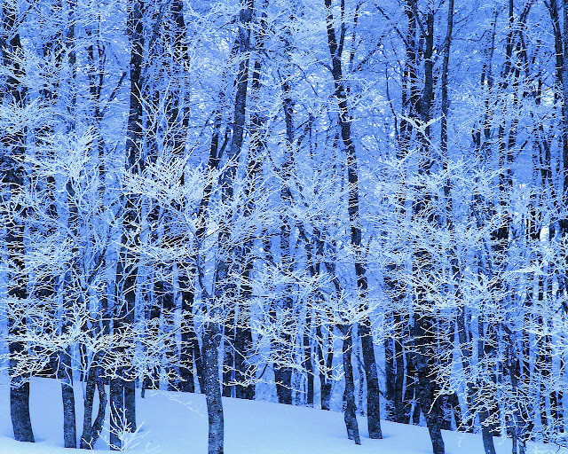 Winter wallpaper snowy forest