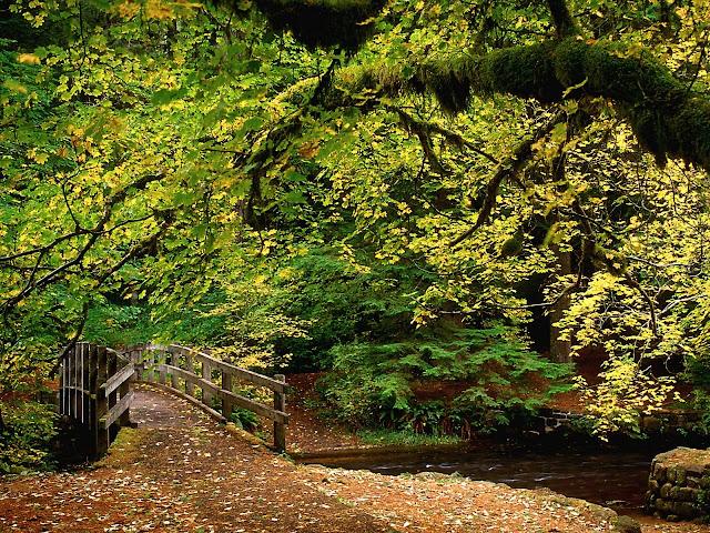 Bridge silver falls state park oregon