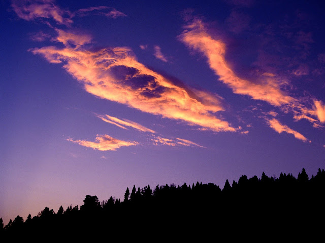 Painting the forest sky Nature wallpaper