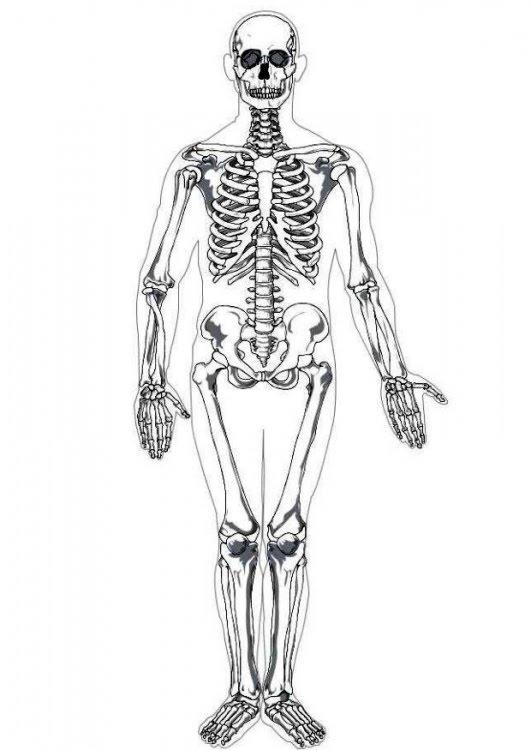 conociendo mi cuerpo   u00bfpodr u00edas concebir el cuerpo humano