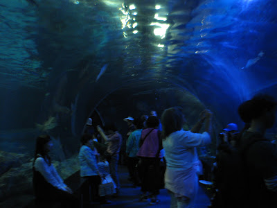 A picture of this tunnel that goes through the big shark tank