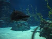 Duh-duh, duh duh duh-duh!  Shark!