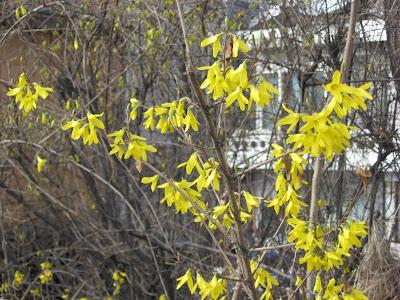 kaenari flowers