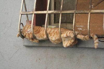 Imagem do dia - Página 20 Gato+maluco