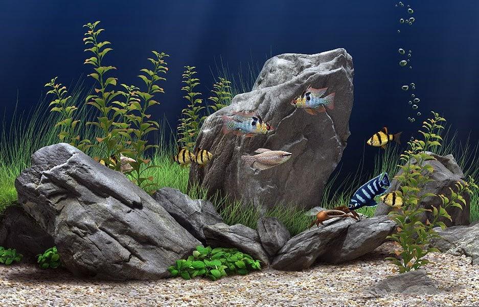 Mundo de rocas las mejores rocas para tu acuario for Mejores peces para acuario