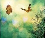 """""""Ser feliz sem motivo é a mais autêntica forma de felicidade."""""""