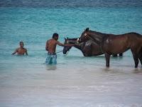 Swimming Racehorses