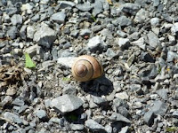 Snail Pace