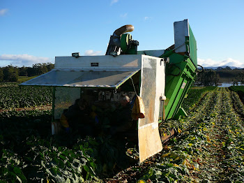 Our Brussels sprouts harvester