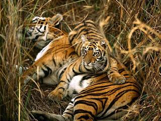 About Bangladesh, bangladesh tourism, Bangladeshi Knowledge,