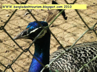 About Bangladesh, bangladesh tourism, Bangladeshi Knowledge, Sundarban, travel bangladesh,
