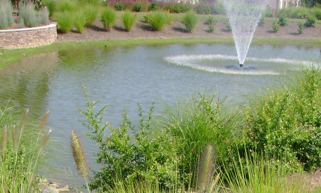 Garden View Ornamental Grass Around The Pond