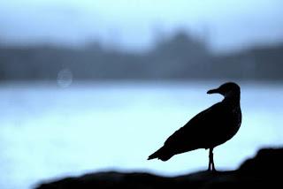 bird at sahil road, kadikoy istanbul