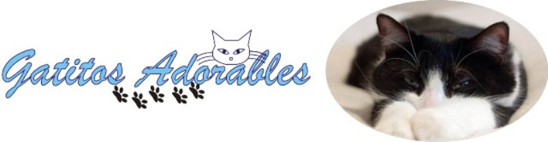 Gatitos Adorables