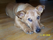 Spencer adopted 12/5/09