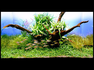 Nature Aquarium Такеши Амано