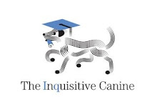 Dog Training: Privates, Workshops, Virtual Counseling