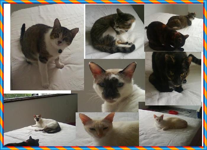 A turminha dos cats