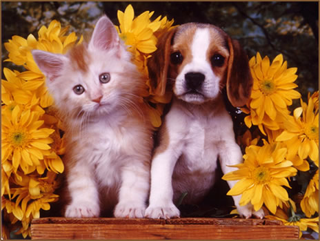 cute puppies and kittens together. kittens and puppies. kittens