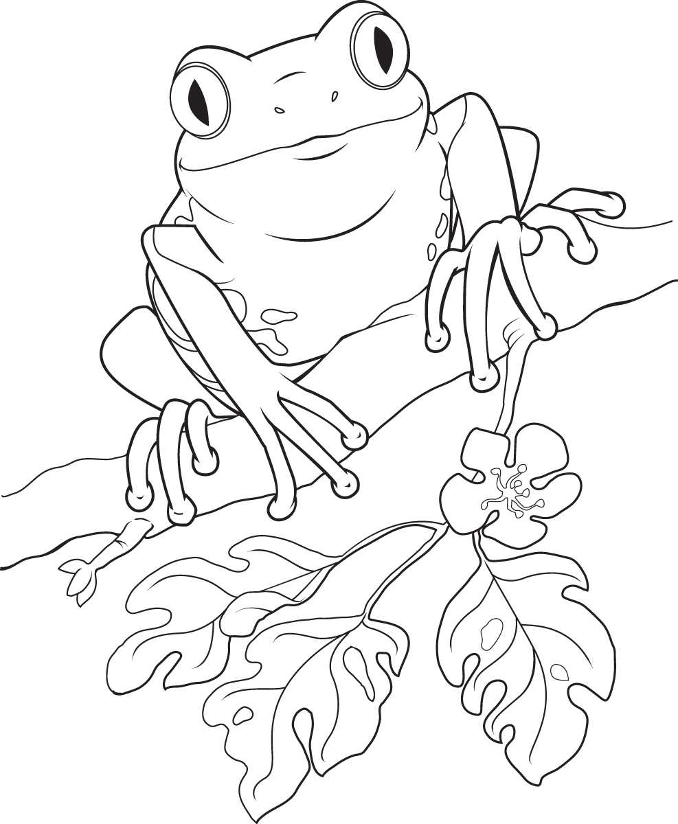 Line Drawing Frog : Frog clip art vector free images