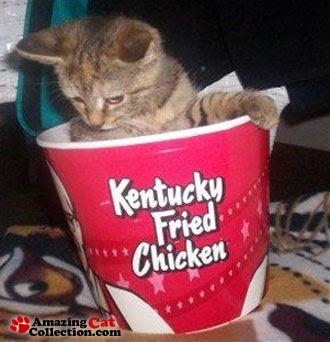 http://3.bp.blogspot.com/_ugQwyT0yjU4/RyI2Vtm8qjI/AAAAAAAABOQ/ZVqbLJvRUuM/s400/kentucky-fried-cat.jpg