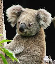Trust Me:Our Koala Burgers are 100% Koala