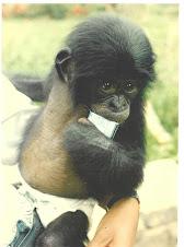 Wild Orphan Bonobo