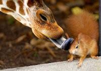cute friends love card