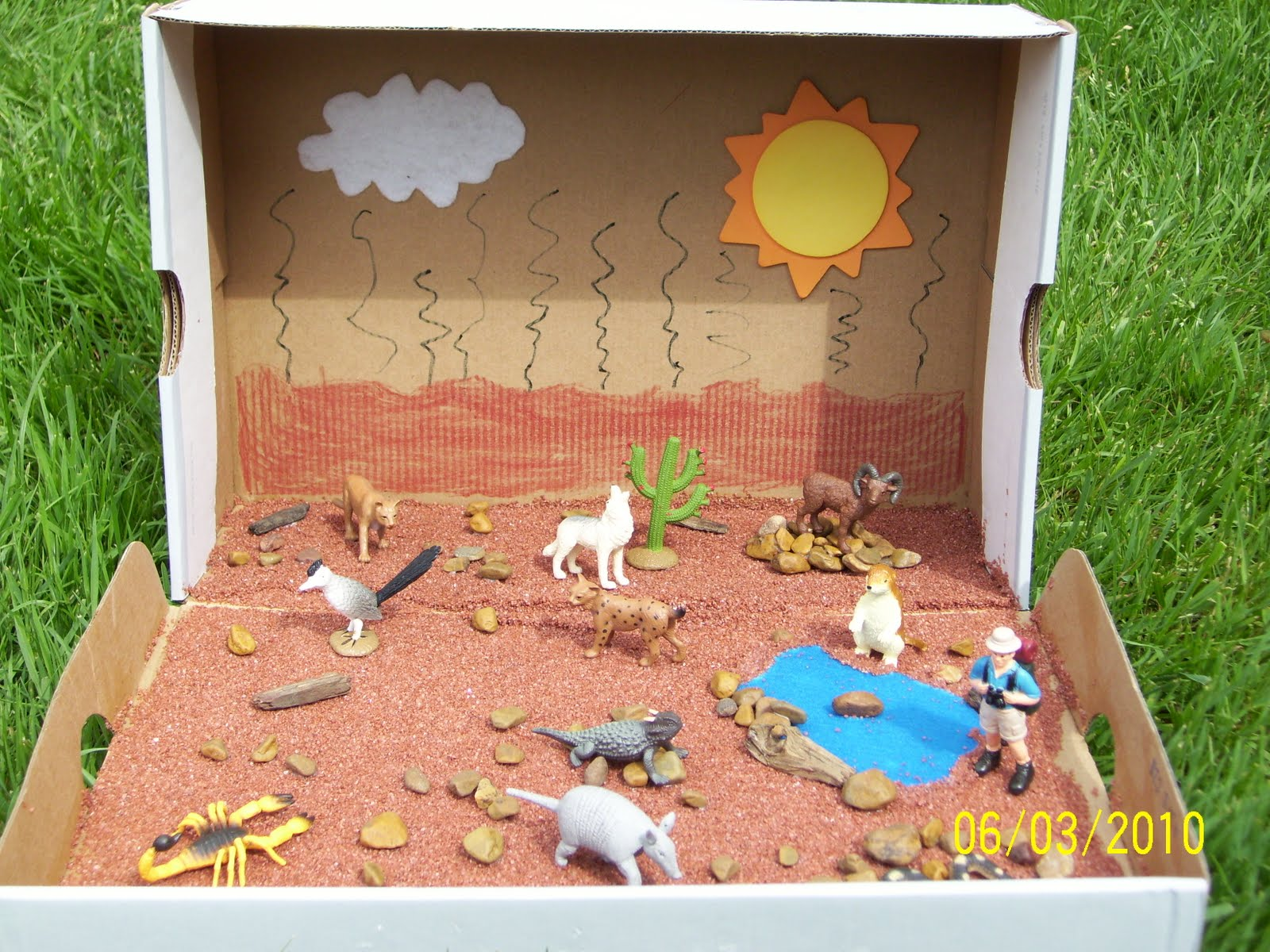 Project board!! on Pinterest | Dioramas, Deserts and Biomes