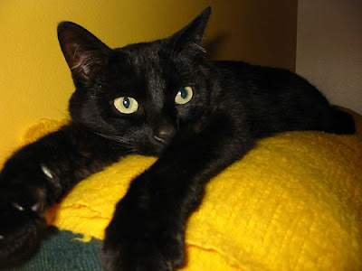 Registro de Mascota - Página 2 Gato-negro