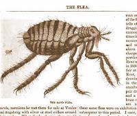 Lawn treatment for fleas
