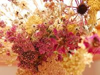 Сухите цветя  Dry_flower10