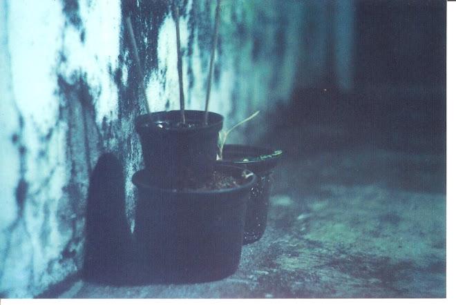 vasinhos verdes de musgo