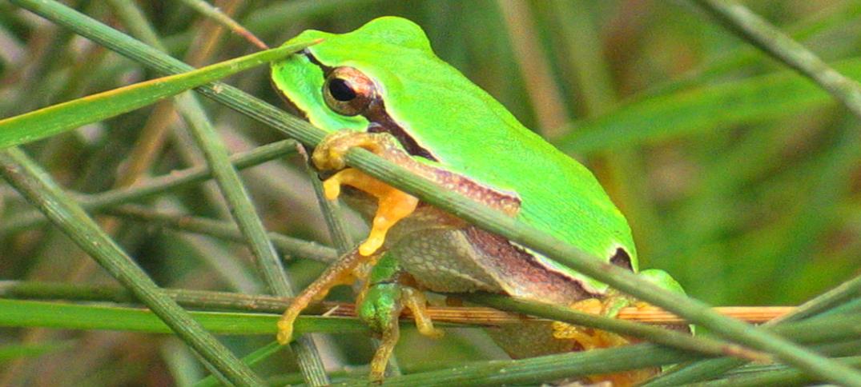 Concurso de fotografia - Biodiversidade em Portugal