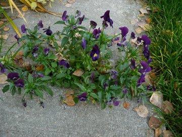 Small Flower Garden Along