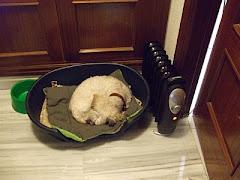 Kiki: mi perro