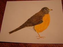 Winter Robin