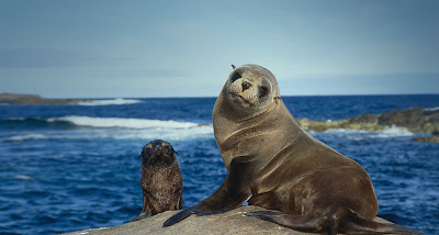 Amazing picture of sea lion