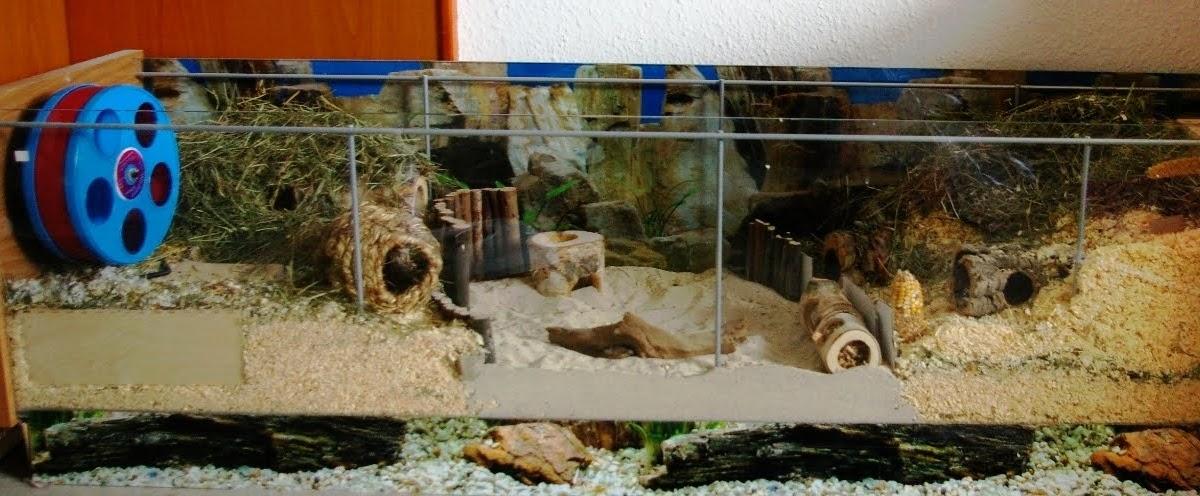 Apothekerschrank Einsatz Ikea ~ Naturnahe Hamstergehege Detolf Vitrine für Robo Casimir