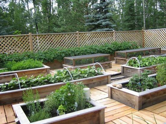 Raised garden raised bed no till gardens for Beautiful raised gardens