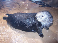 Sea Otter Hamming It Up