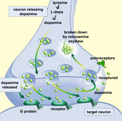 Dopamine deficiency  & natural  diet treatment