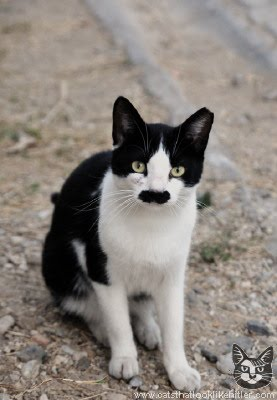 Photos of Cats that look like Hitler from catsthatlooklikehitler.com