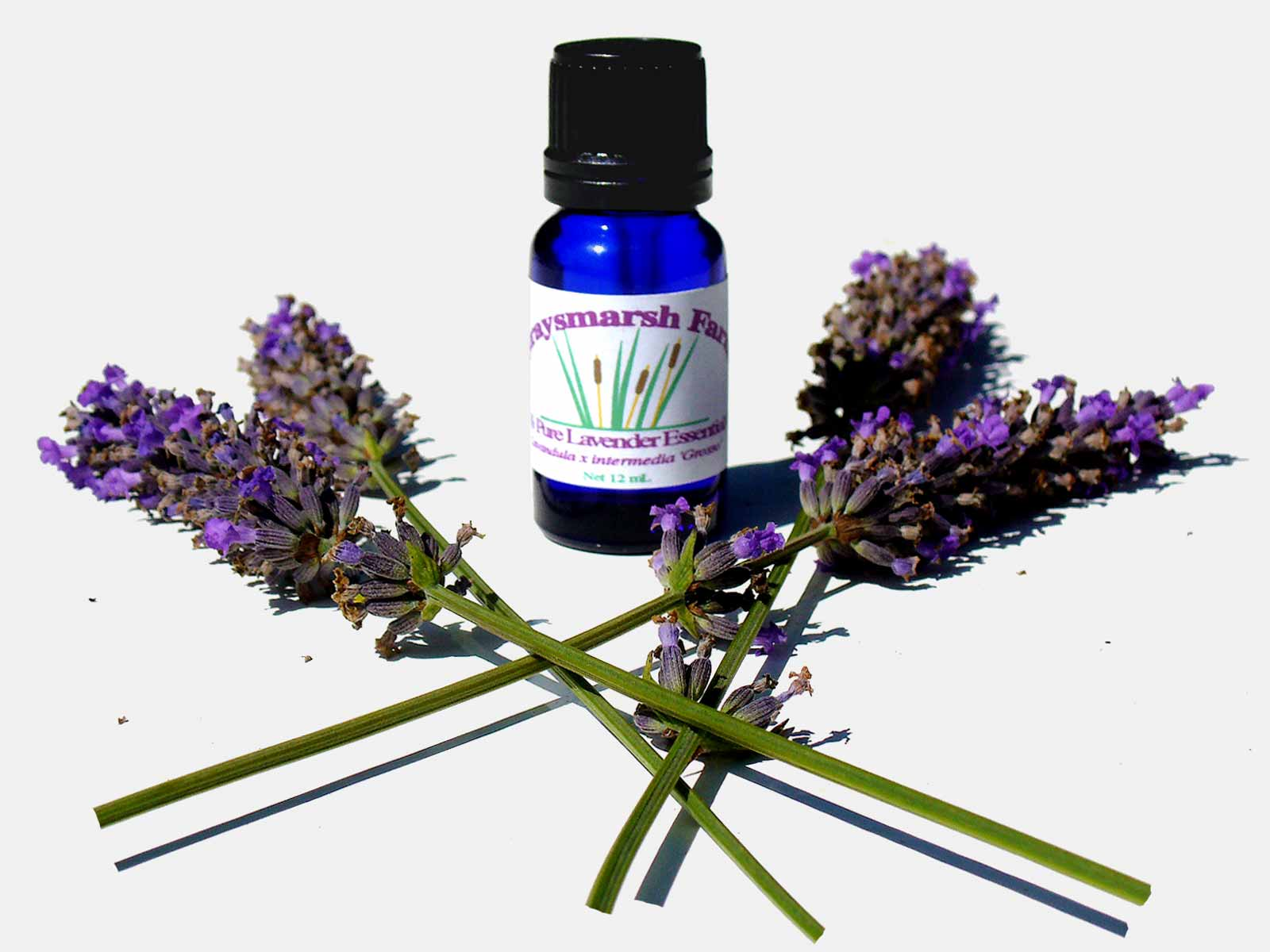 Where to find lavender oil