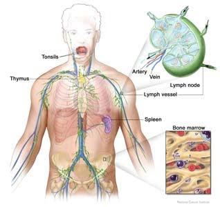 Lymphoma Symptoms in Adults: Warning Signs of Lymphoma