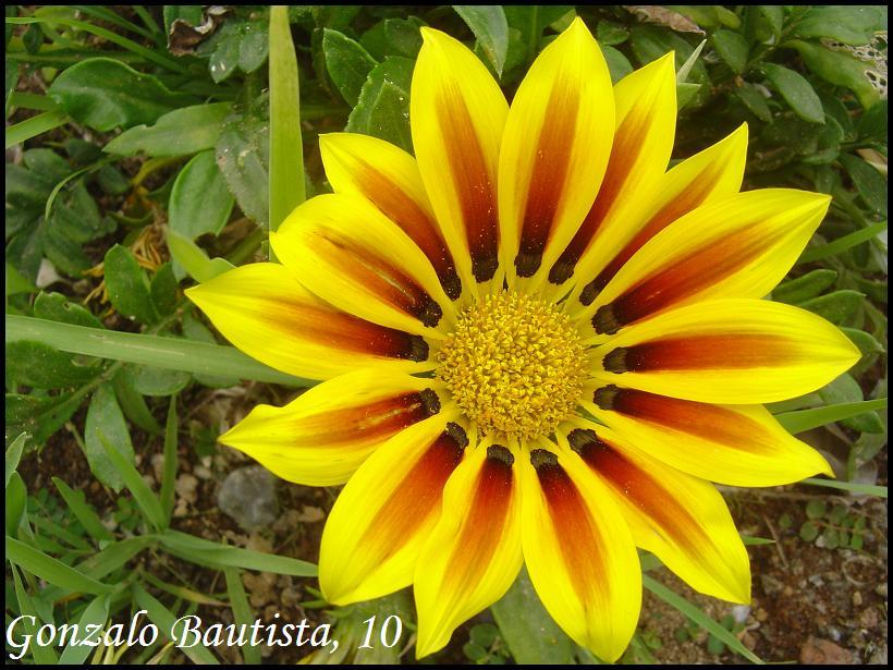 gonzalo flor: