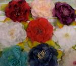 Popular Roses