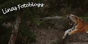 Linas fotoblogg