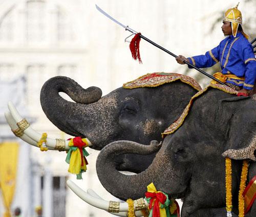 Elefanti che ridono in un momento solenne