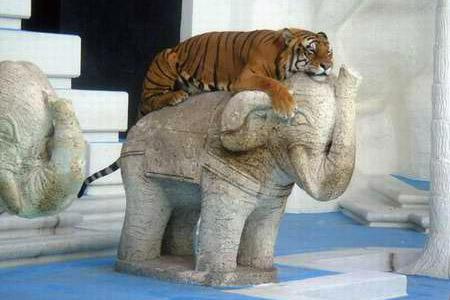Gli sfregamenti della tigre